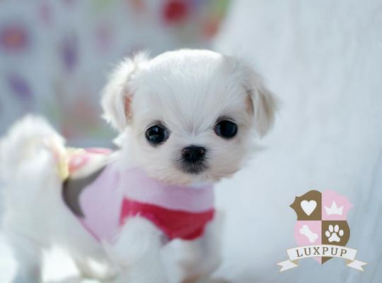 Super Cute Dogs For Sale