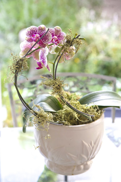 Fill planter with moss; How to Landscape an Orchid; Nora's Nest