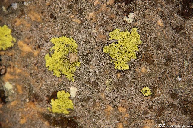 lichens humouristique de Fontainebleau