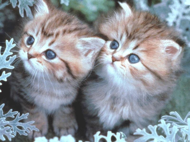 baby cats see a picture