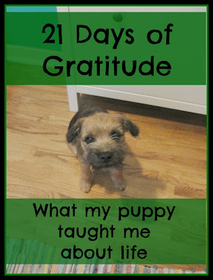 What my puppy taught me about life