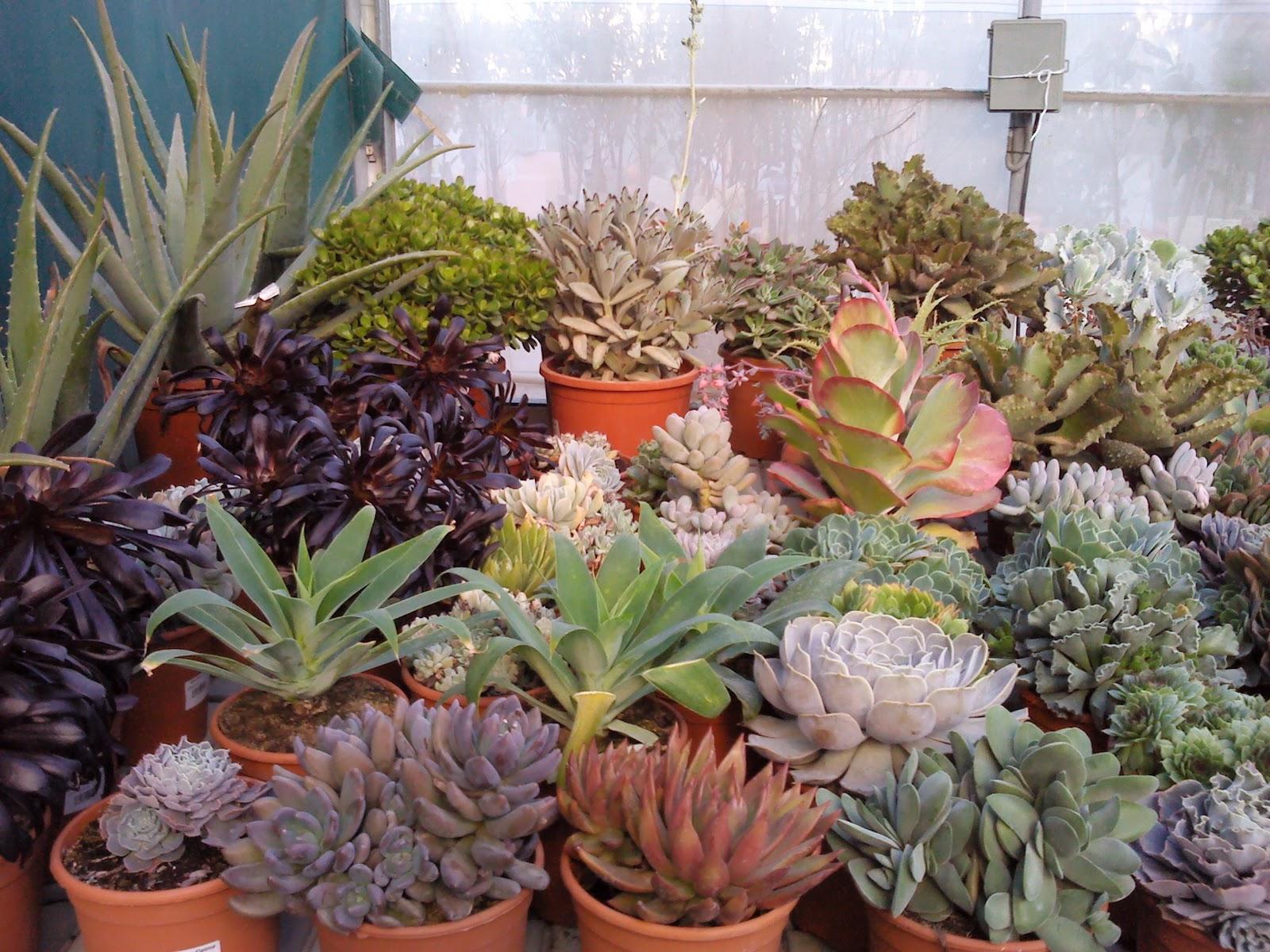 Garden la palma crasas y cactus for Plantas exterior mucho sol