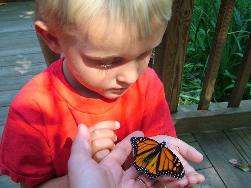 Child holding a Monarch butterfly