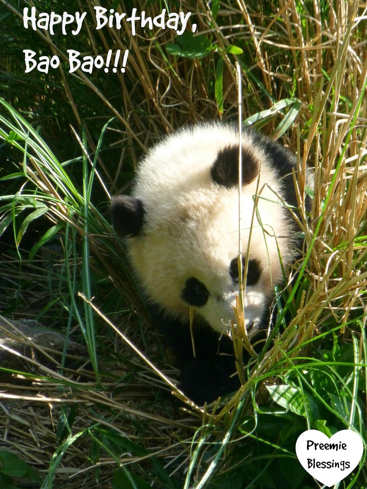 Bao Bao, panda, birthday, National Zoo