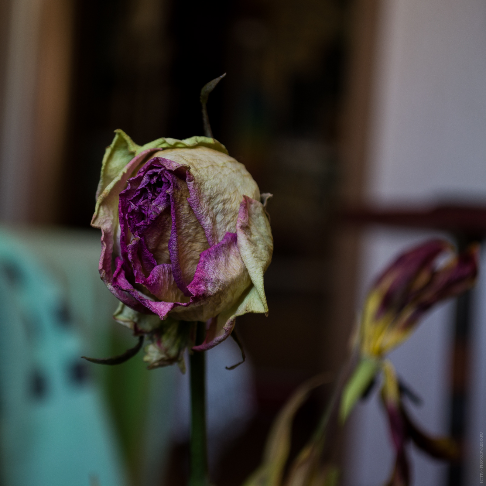 Мёртвые цветы