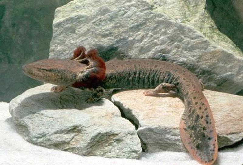 Aeysthetics: Toothless, Stitch, Axolotl, Mud dog, Mudkip, Dragonite