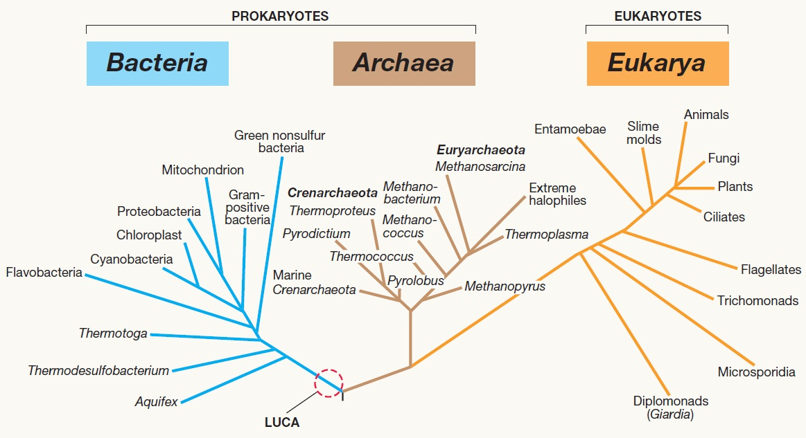 Its everything about biology sebuah tulisan evolusi dan filogeni sebuah tulisan evolusi dan filogeni phylogenetic inference part ii ccuart Choice Image