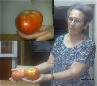 tomates gigantes chacabuco