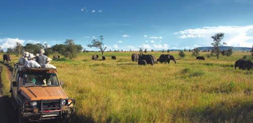 Pode abraçar leão Veja como praticar turismo com animais e sem exploração