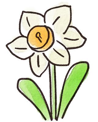 水仙のイラスト(花)