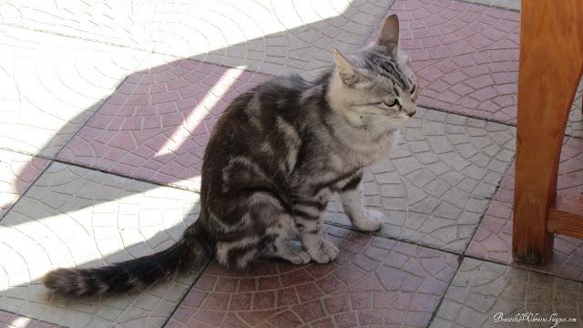 Кошка. Кафе Ласпинский перевал