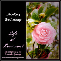 http://lifeatrossmont.blogspot.com/2015/10/wordless-wednesday-october-21-with-link.html