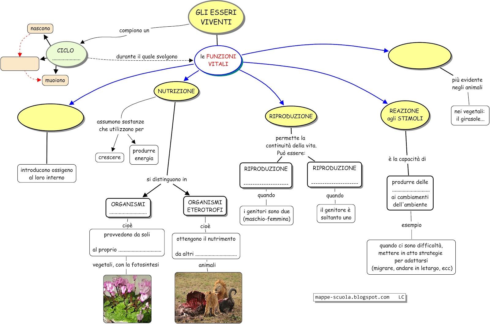 Favorito MAPPE per la SCUOLA: ESSERI VIVENTI, il ciclo vitale e le funzioni  SD24