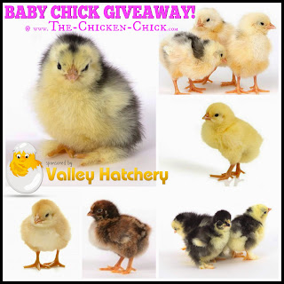 The Chicken Chick celebrates National Poultry Day with a Giveaway-palooza!