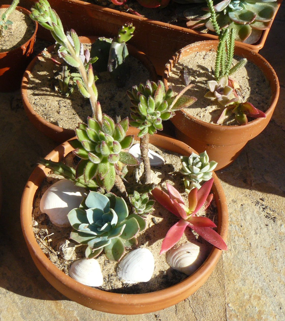 Jardines de cactus y suculentas octubre 2011 - Jardines de cactus y suculentas ...