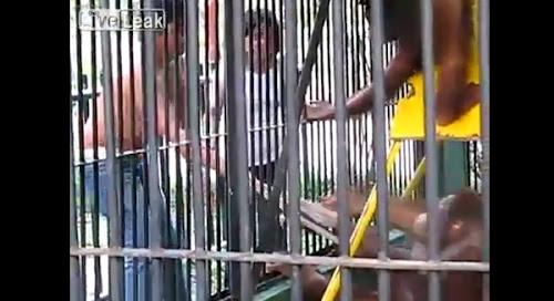 Macaco rouba camiseta de turista