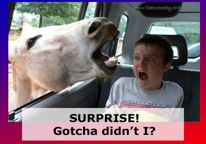 Funny animal pictures with captions for adults - photo#10