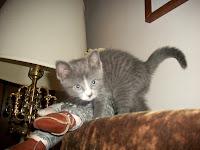 Destitute kitten