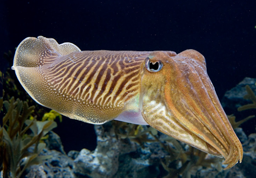 Reino Animalia: Filo Mollusca