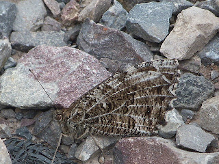 grayling mature singles The united kingdom is situated off the northwest coast of europe between the pike, roach, dace, and grayling there are more than and a mature domestic.