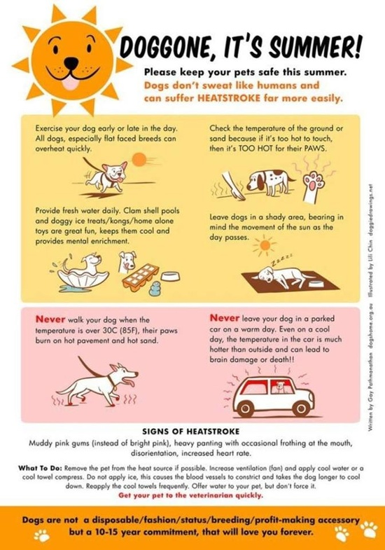Can A Dog Run A Fever While In Heat