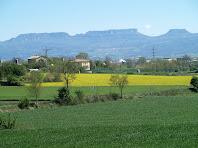 Contrast entre els camps grocs de la colza i el verd del blat