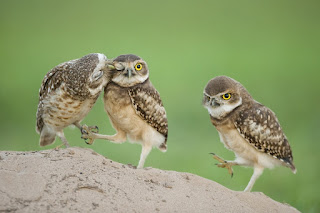 Fotografias de animales salvajes 50