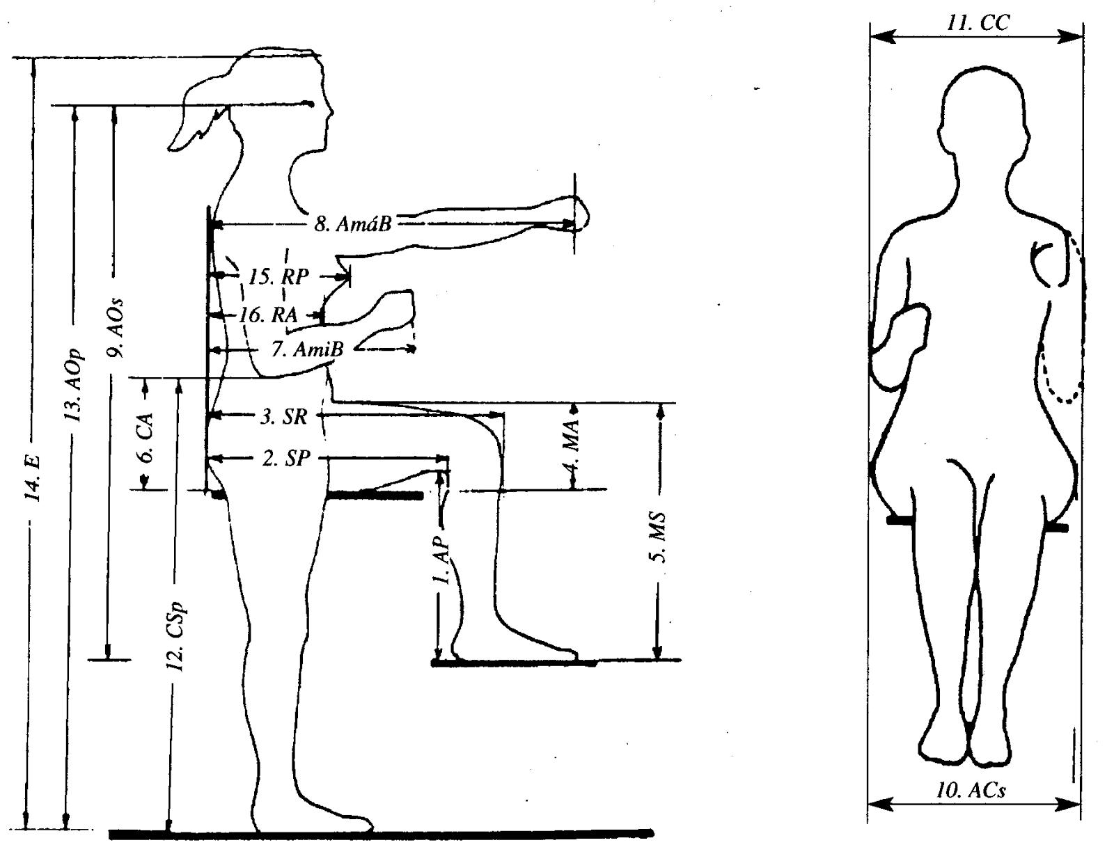 Comunicaci n e imagen profesional autodiagn stico de la for Medidas ergonomicas del cuerpo humano