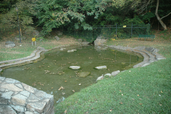 12. Water pool below spring. Fountain City Park