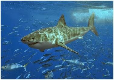 5 Jenis Ikan Hiu Terbesar Dan Terbuas di Dunia