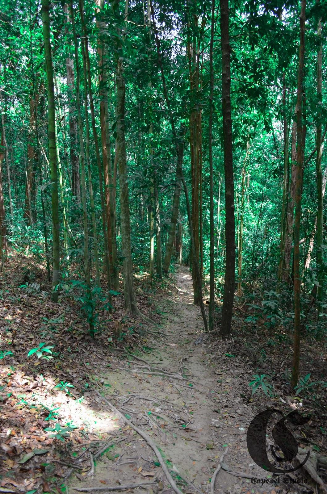 Hutan Panucur, Muka Kuning, Batam