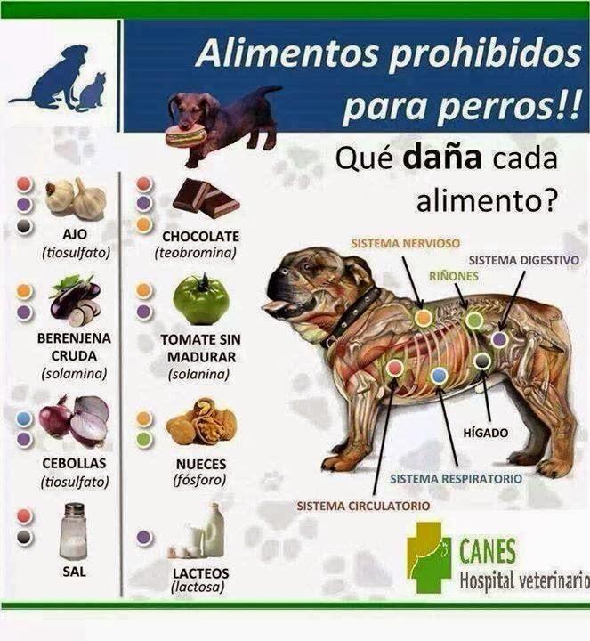 Infografía de los alimentos prohibidos para los perros