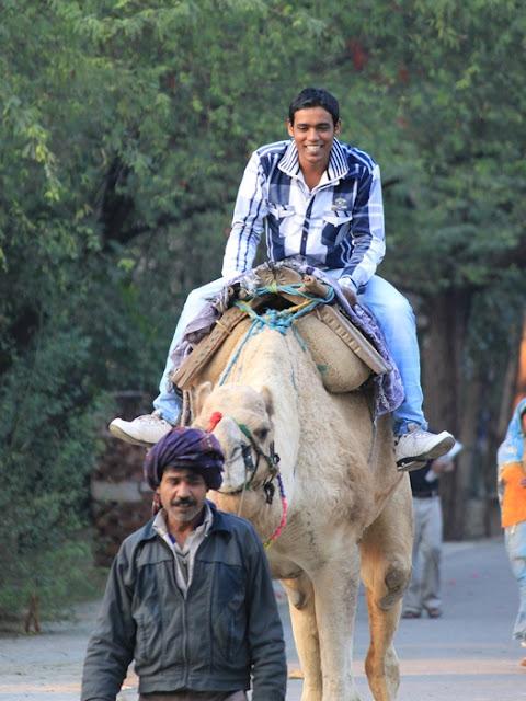 довольный индус на верблюде