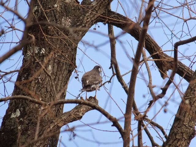 28日、昼から小畑川畔で野鳥を楽しんだ。