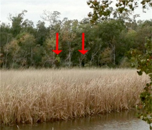 The World is Jacked Up : Evidence of Bigfoot found! Seriously. For ...