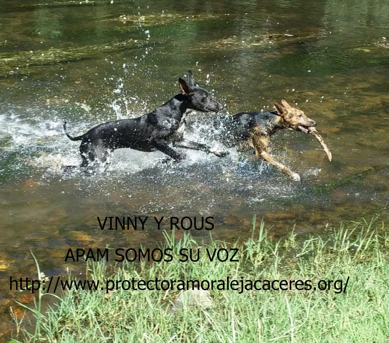 Vinny y Rous