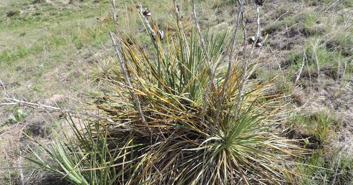 Yucca Moth Range A land ethic: W...