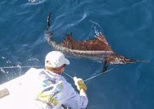 Key West sailfish deep sea fishing