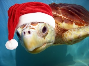 turtle, christmas turtle, sea turtle, amphibian
