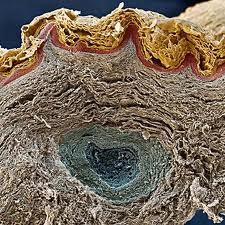 Como quitar las celulas muertas de la piel