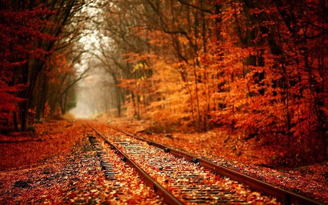 Beautiful Autumn Leaves Desktop Wallpaper