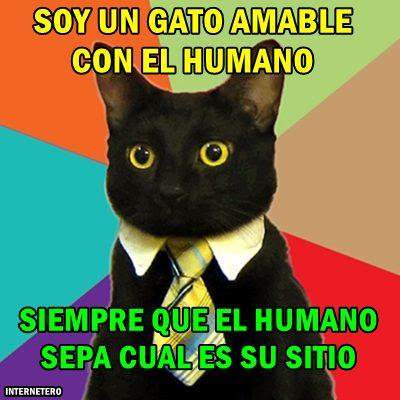 mascotas-cultura-blanca-gatos