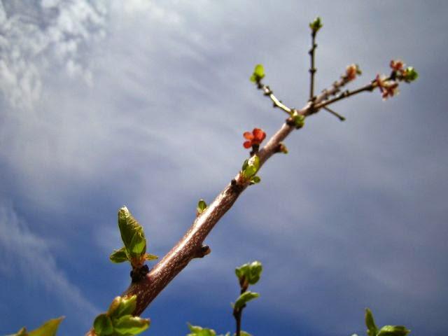 poemas a la primavera