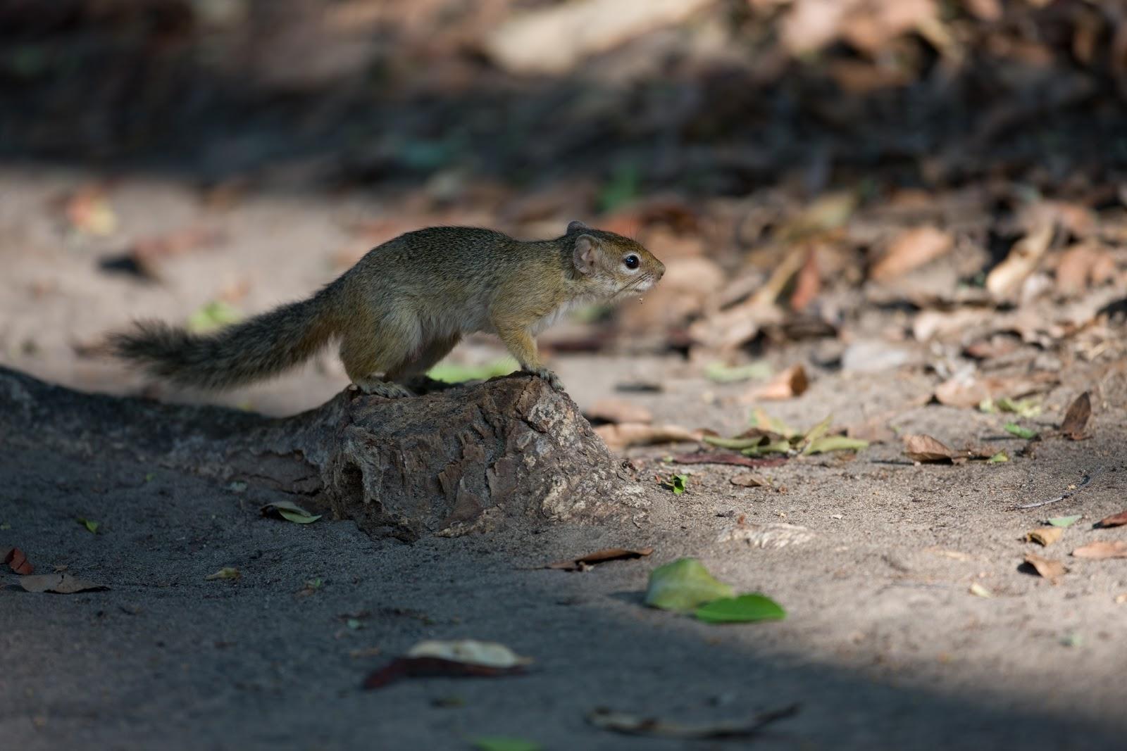 squirrel island chat Grey squirrel resorts & vacation rentals.