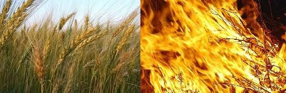 Los obradores de iniquidad serán arrojados al horno de fuego