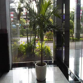 Palm Putri