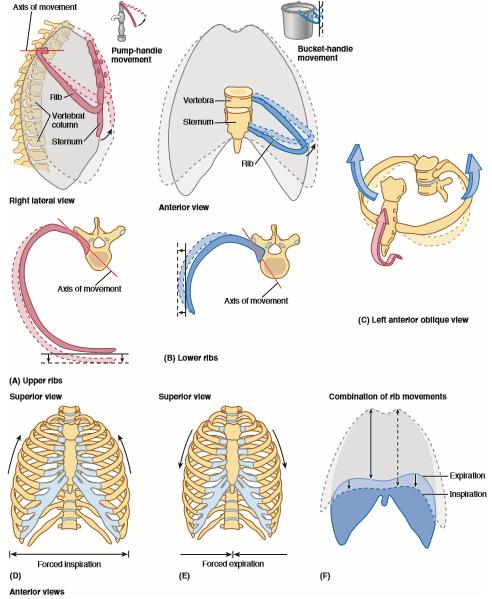 clinically oriented anatomy lippincott williams wilkins pdf