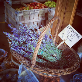 Fresh cut lavender at Quarry Hill Orchard and Winery.