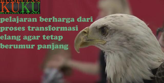 pelajaran berharga dari proses transformasi elang agar tetap berumur panjang