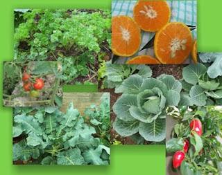 horta, verduras, legumes, saúde, alimentação, inclusão